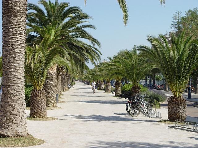 Free san benedetto del tronto promenade palm
