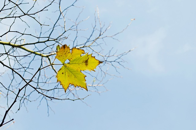 Free last yellow leaf branch branches tree nature