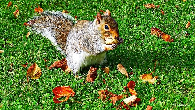 Free squirrel wildlife animal park nature