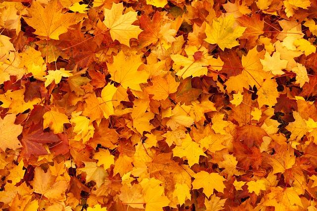 Free autumn background color fall foliage gold leaf