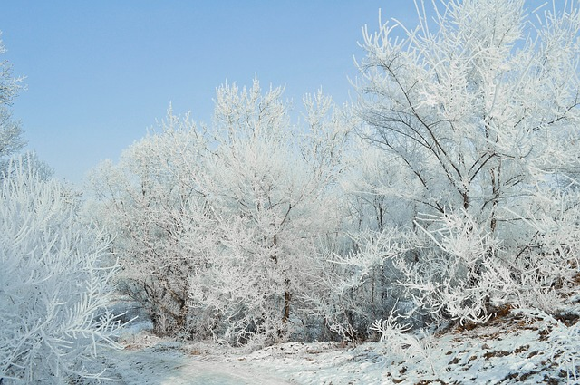 Free snow frost landscape nature trees forest