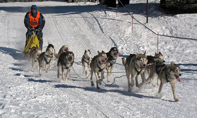 Free dogs race musher competition winter snow ice