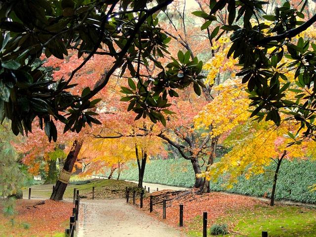 Free okayama japan park fall autumn trees foliage