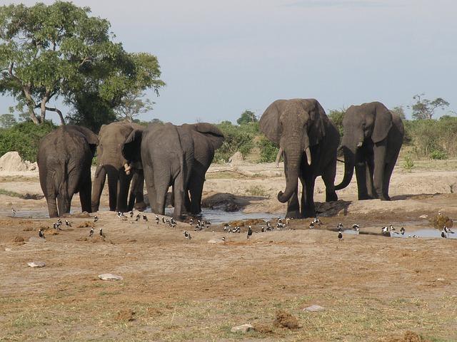 Free africa botswana animals okavango delta elephants