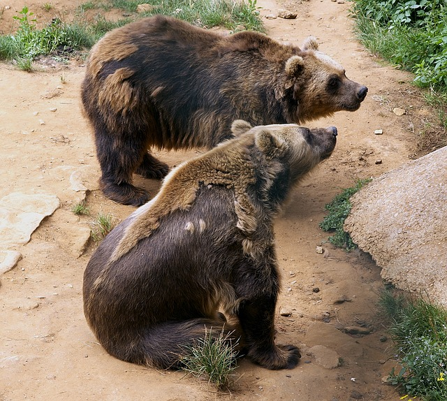 Free bears zoo shedding outside captivity grass plants