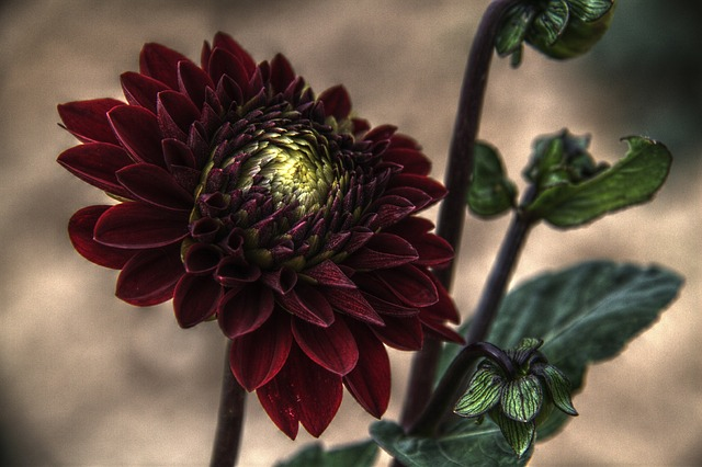 Free flower plant nature outside lovely hdr beautiful