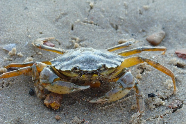 Free crab beach sand shore shoreline nature outside