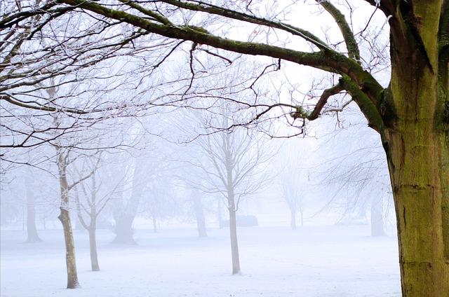 Free winter frost snow nature macro landscape