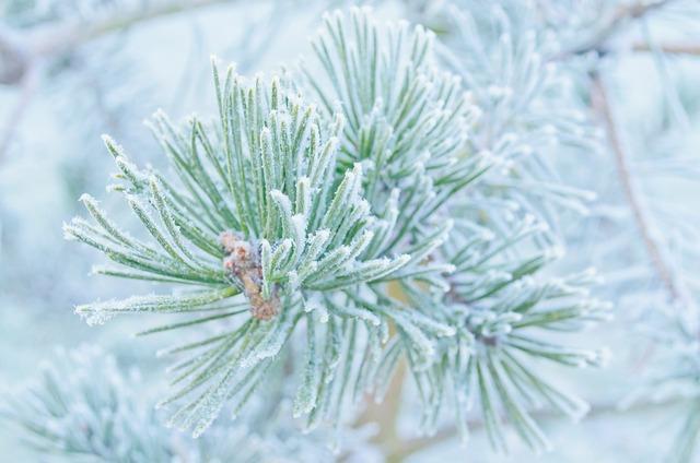 Free winter frost snow nature macro wallpaper