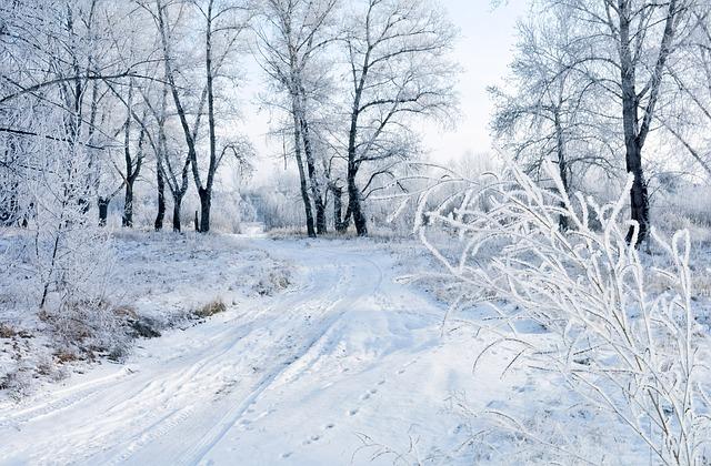 Free Photos: Snow winter landscape nature frost christmas | PublicDomainPictures