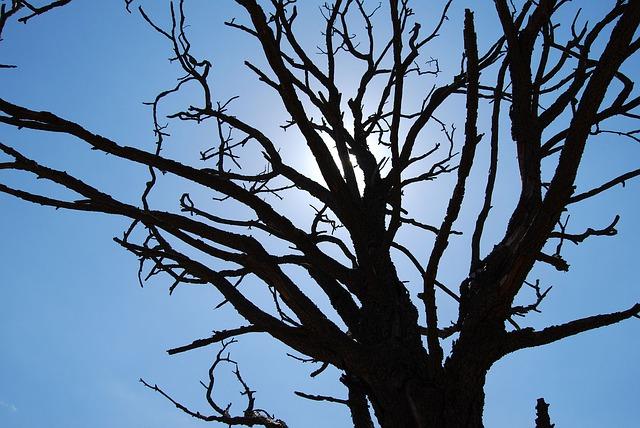 Free tree silhouette blue sky seasonal