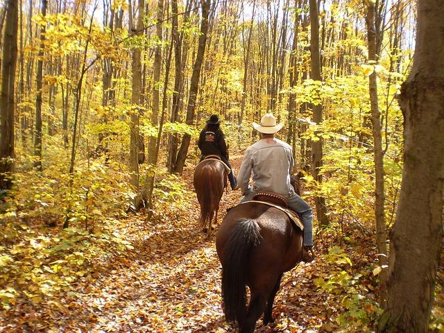 Free horse horseback autumn