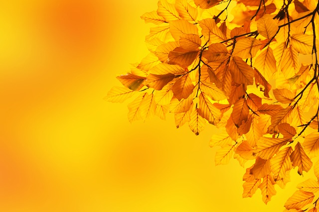 Free autumn beech leaves branch background color fall
