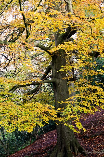 Free autumn season leaves tree color background