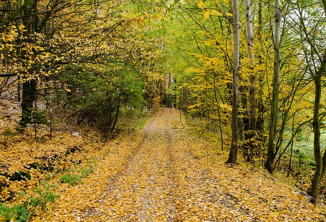 Free autumn road forest path walking nature seasons