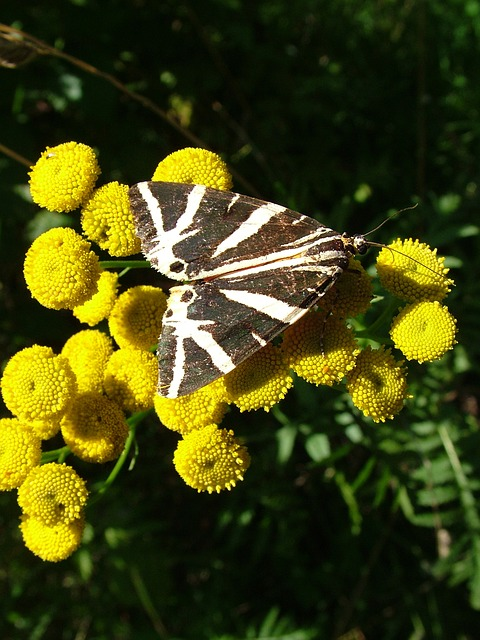 Free butterfly flower summer