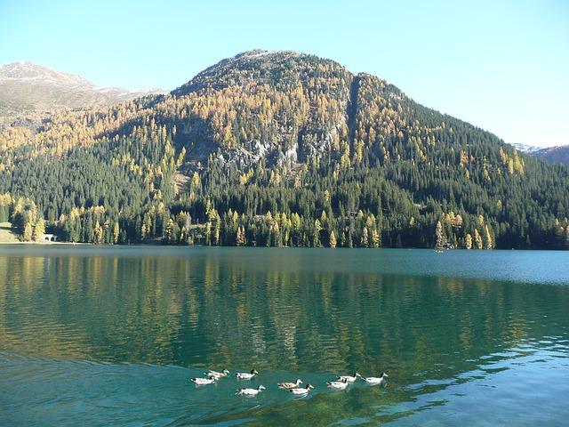 Free bergsee ducks see