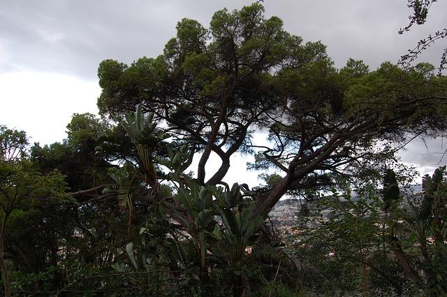 Free madeira funchal botanical garden