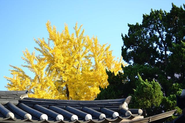 Free bank leaves yellow republic of korea damme