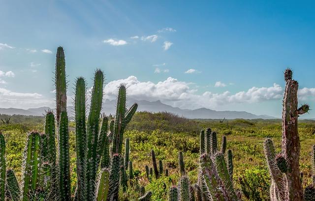 Free venezuela landscape sky clouds cactus cacti