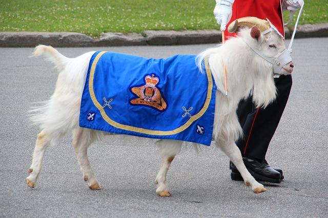 Free goat mascot canada military cute blanket