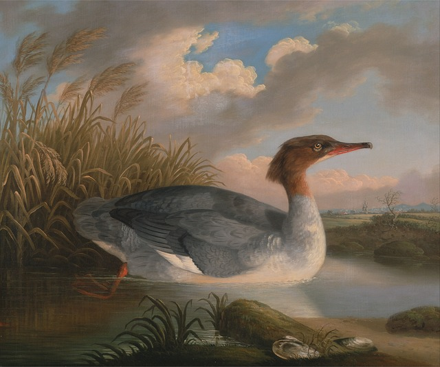 Free robert padley art painting oil on canvas duck