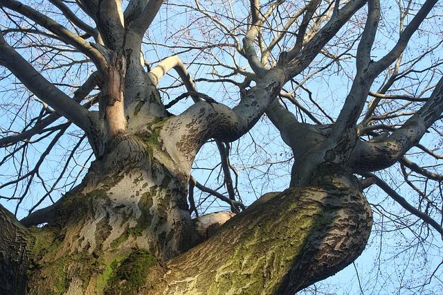 Free tree kahl aesthetic crown