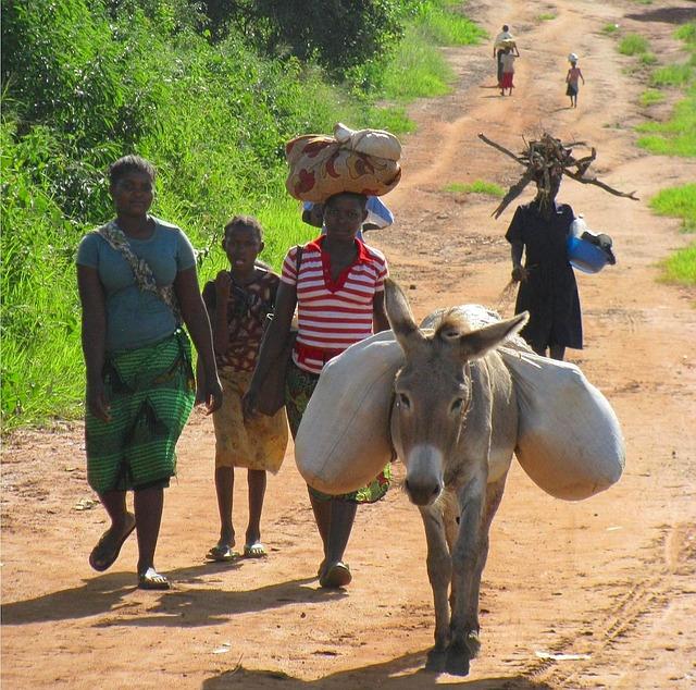 Free mozambique women nature outside donkey trail path