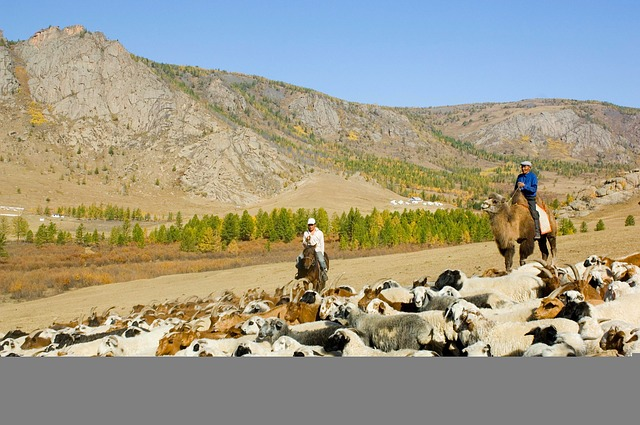 Free mongolia landscape mountains sheep sky trees men