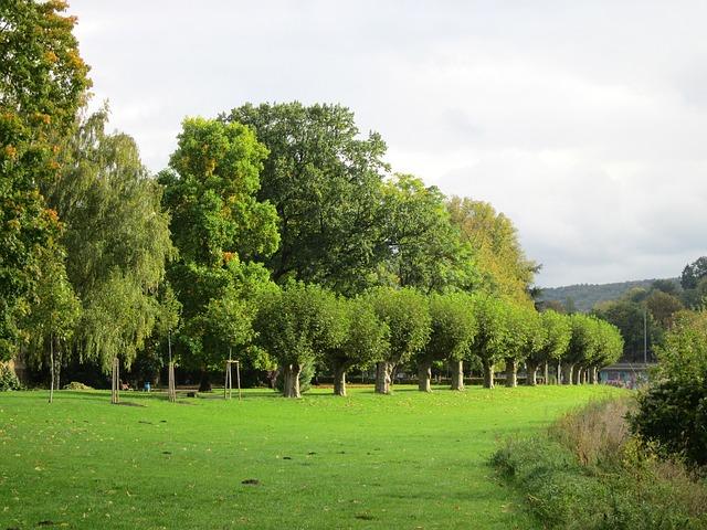 Free saarbrucken germany landscape summer trees grass