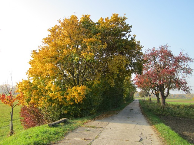 Free germany landscape road trees fall autumn foliage