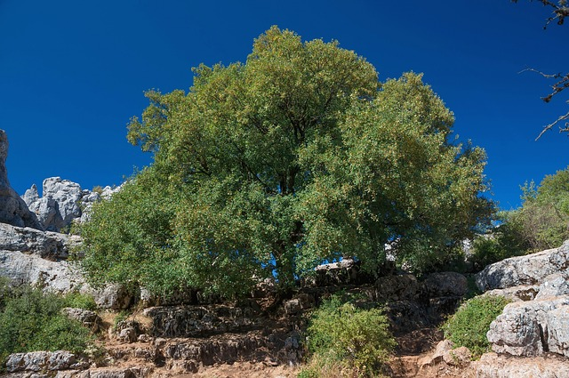Free andalusia spain trees nature outside sky summer