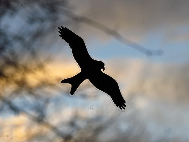 Free bird adhesive window pane black outline silhouette