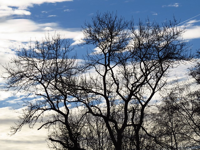 Free tree gnarled aesthetic branches sky clouds nature
