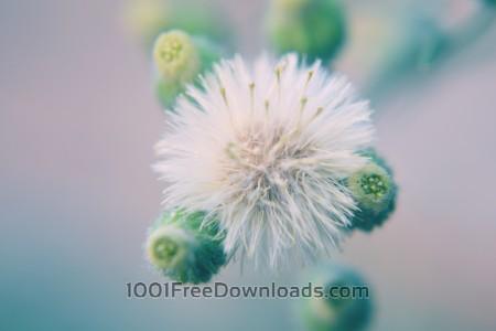 Free White Flower