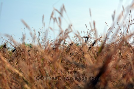 Free Dry Grass