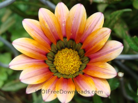 Free Orangish flower
