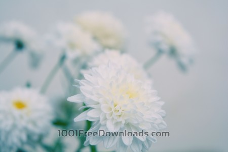 Free Defocused white flowers