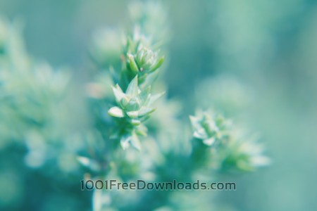 Free Blurred green plant