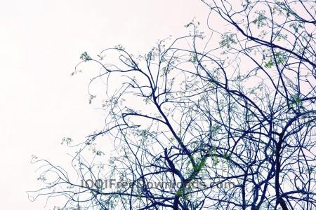 Free Tree silhouette