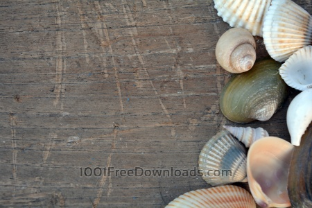 Free Sea Shells on Wooden Board