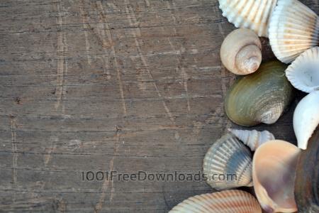 Free Sea Shells on Wooden Board