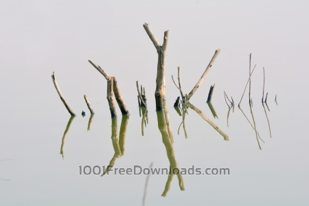 Free Tree Branch in River