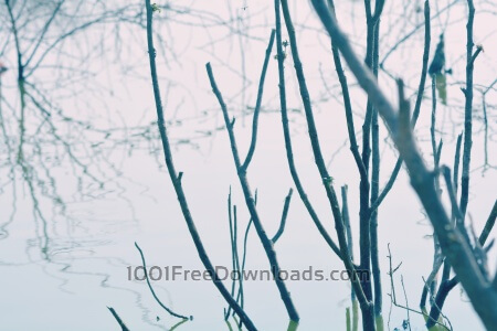 Free Branches in river