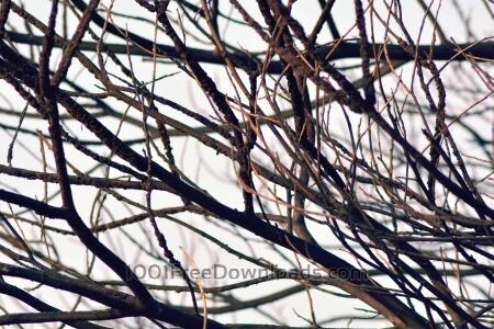 Free Dry Tree