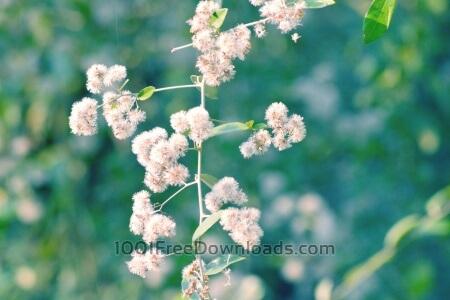 Free Beautiful white flowers