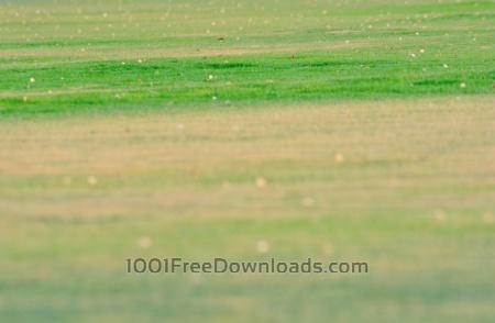 Free Green Grass Blur