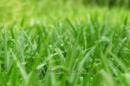 Free Nice Green Grass