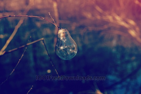 Free Close up light bulb