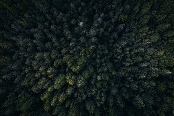 Free Redwood City